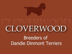 Dandie Dinmont Breeders Somerset UK